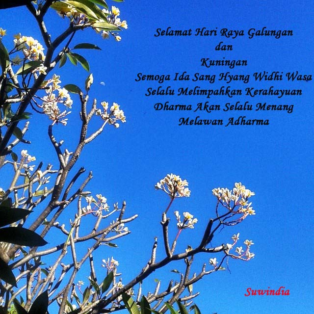 21.05.2014 Pohon Jepun di Pura Mertha Sari SPN Singaraja