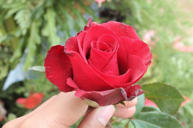 seger banget kan?ini mawar jadi salah satu bagian dekorasi yg udah dipasang berhari hari lalu